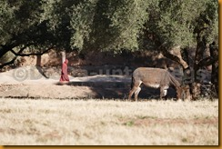 Marokko00367