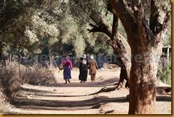 Marokko00368