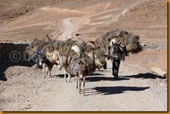 Marokko00993