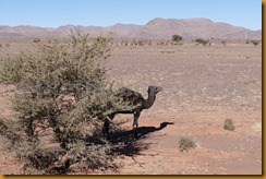 Marokko01181