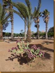 Marokko01322