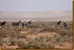 Marokko01531