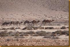 Marokko01553