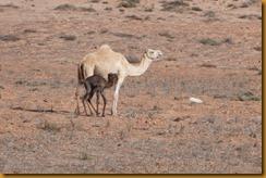 Marokko01569