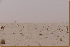 Mauretanien0133
