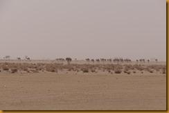 Mauretanien0135
