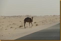 Mauretanien0140