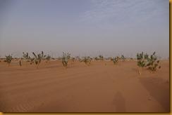 Mauretanien0149