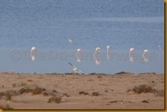 Mauretanien0171