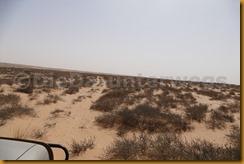Mauretanien0238 - Kopie