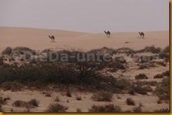 Mauretanien0244 - Kopie
