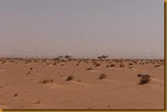 Mauretanien0246 - Kopie