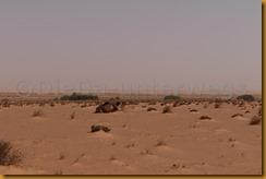 Mauretanien0247 - Kopie