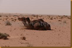Mauretanien0248 - Kopie