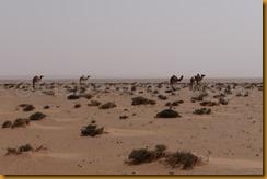 Mauretanien0250 - Kopie