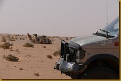 Mauretanien0252 - Kopie