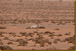 Mauretanien0254 - Kopie