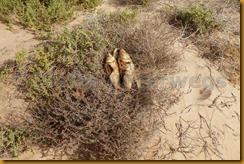 Mauretanien0288 - Kopie