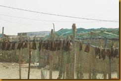 Mauretanien0294 - Kopie