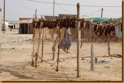 Mauretanien0295 - Kopie