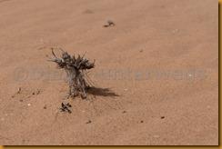 Mauretanien0300 - Kopie
