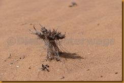 Mauretanien0301 - Kopie