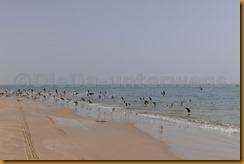Mauretanien0352 - Kopie