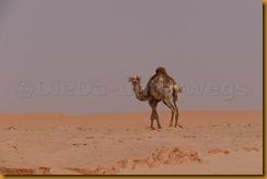 Mauretanien0356 - Kopie