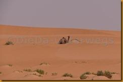 Mauretanien0359 - Kopie
