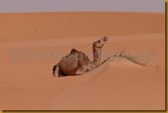 Mauretanien0363 - Kopie