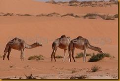Mauretanien0364 - Kopie