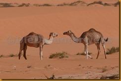 Mauretanien0368 - Kopie