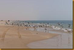 Mauretanien0370 - Kopie