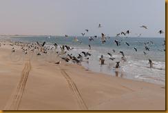 Mauretanien0371 - Kopie