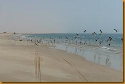 Mauretanien0372 - Kopie