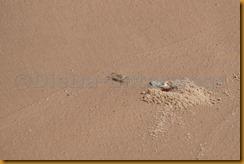 Mauretanien0376 - Kopie