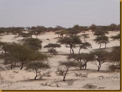 Mauretanien0454