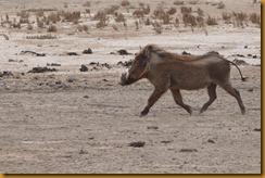 Mauretanien0500