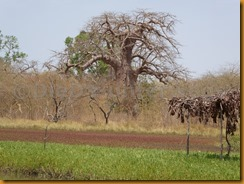 Gambia0381
