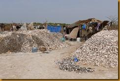 Senegal2012