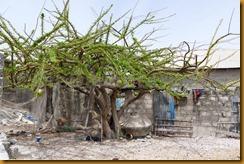 Senegal2093