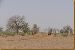 Senegal2360