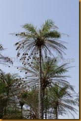 Guinea Bissau0161
