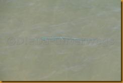 Guinea Bissau0382