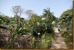 Guinea Bissau0436