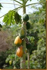 Guinea Bissau0440
