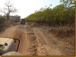 Guinea Bissau0595