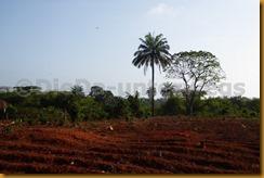 Guinea Bissau0614
