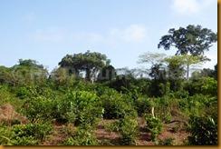 Guinea Bissau0616