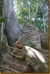 Guinea Bissau0647